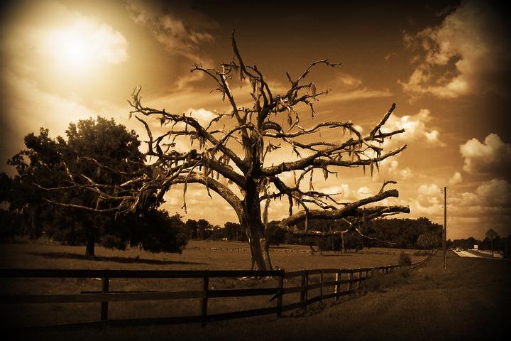 my favorite tree 2